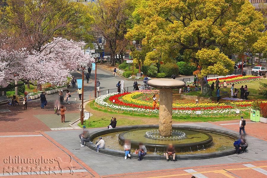 阪神尼崎駅前の桜の木とチューリップの花壇