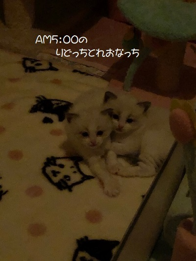C20210124IMG_4248.jpg