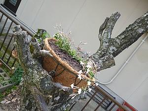 2003204.jpg