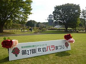 2010141.jpg