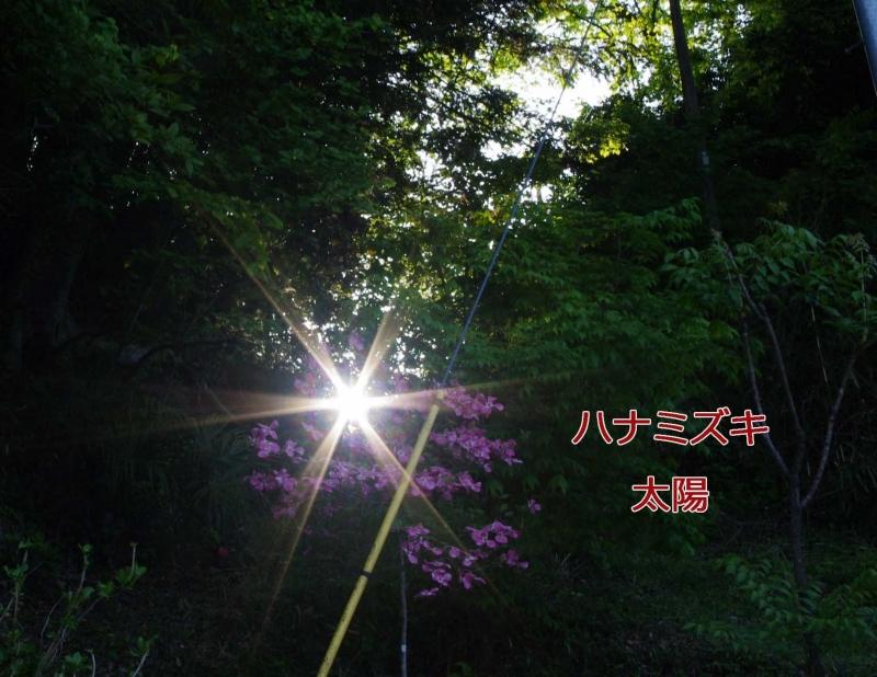 2012 05 13_4689_edited-1