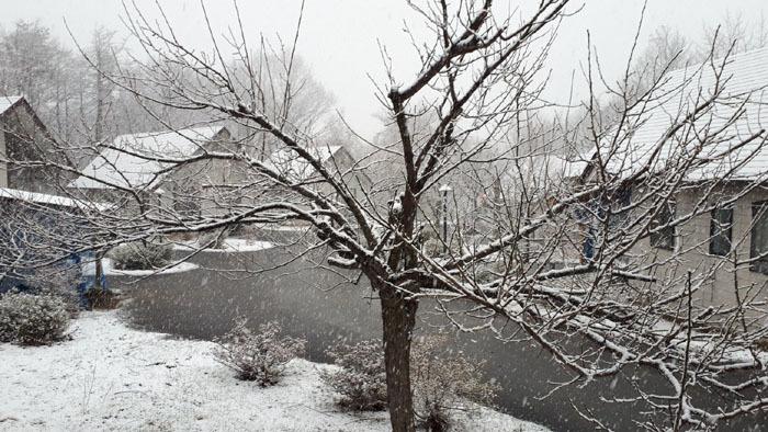 20200405春雪