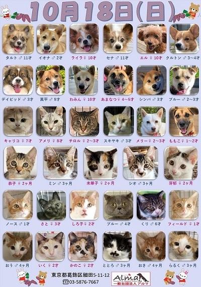 ALMA ティアハイム2020年10月18日 参加犬猫一覧