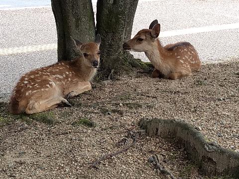 deer13.jpeg