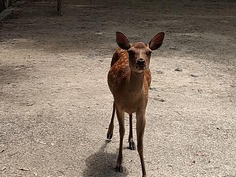 deer9.jpeg