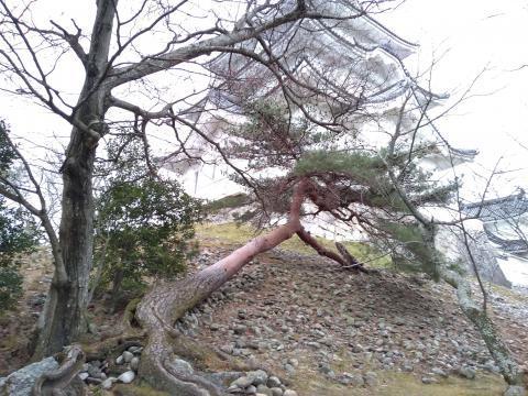 伊賀上野城2020