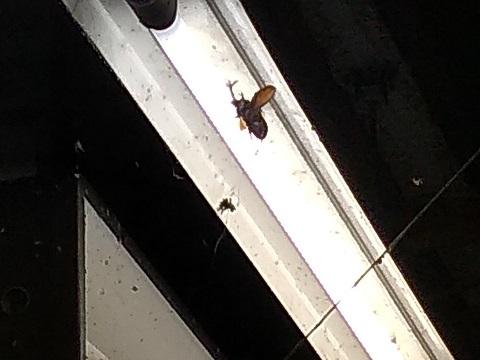 カブトムシとクモ