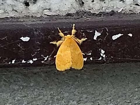 黄色い虫8月