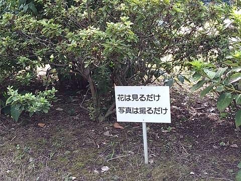 館山市城址