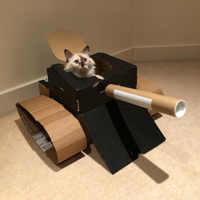 quarantined-owners-build-cardboard-cat-tanks-5eaa7d9938885-png__700.jpg