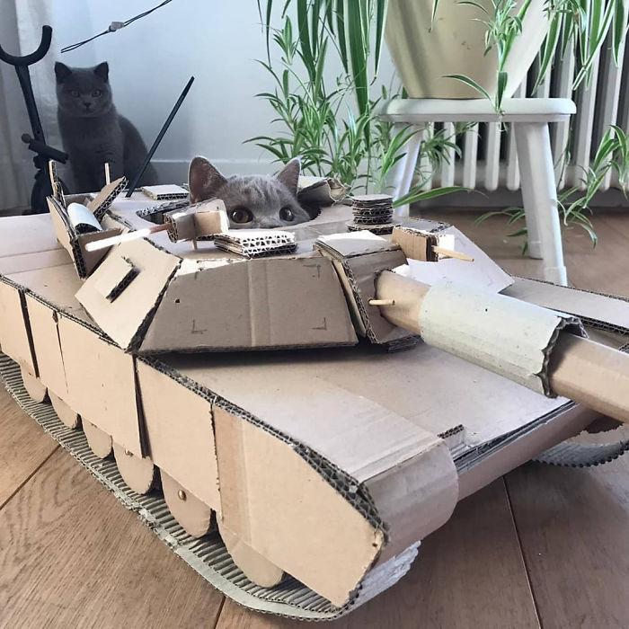 quarantined-owners-build-cardboard-cat-tanks-5eaa804583ccb-png__700.jpg