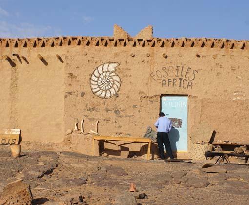20200412 モロッコ 化石土産店 18㎝ DSC03210