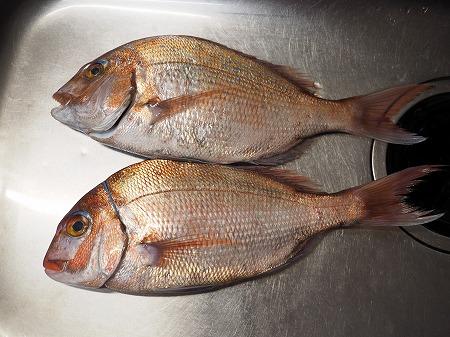 鯛と新玉ねぎの中華風サラダ027