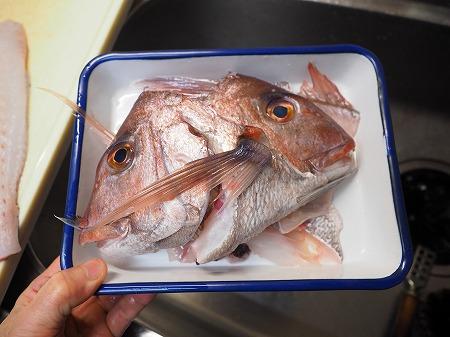 天然鯛の松皮つくり028