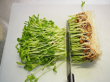 豆苗とエノキの旨味和え026