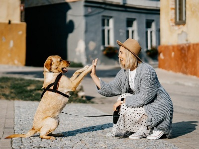 dog-woman-shake-hands-street.jpg