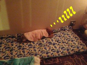 センちゃん寝てます。200327