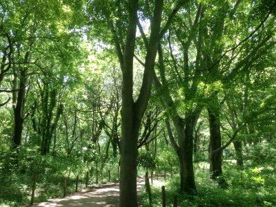 森v200518