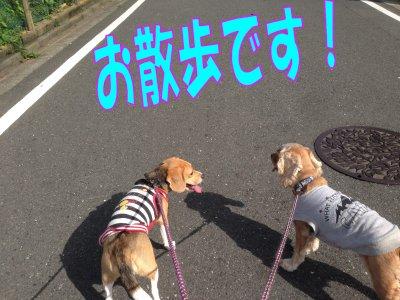 お散歩200524 1