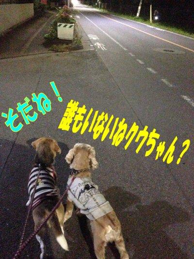 夜のお散歩200530
