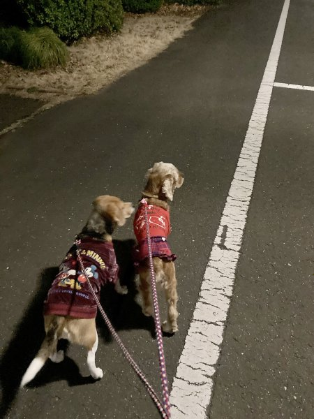 2夜の散歩210304
