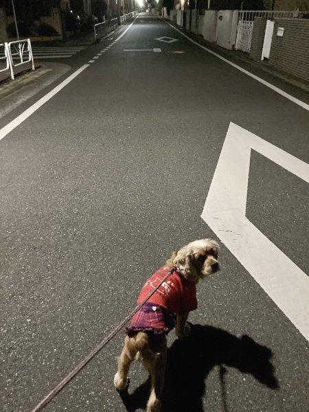 3夜の散歩210305