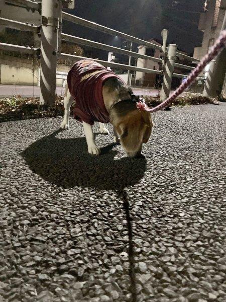 2夜の散歩210305