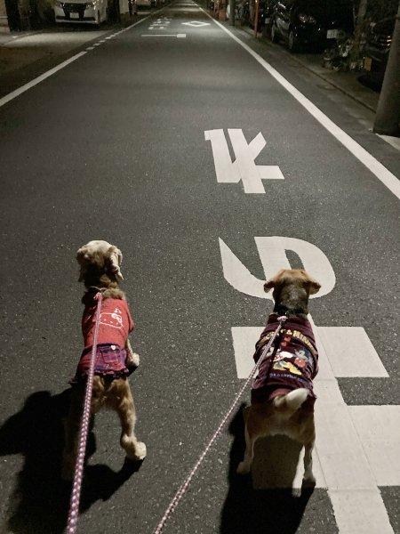 1夜の散歩210305