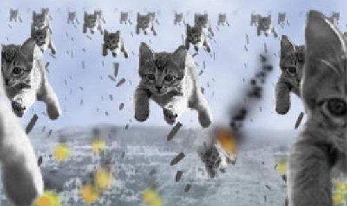 ヒョウが降るっていうから準備してたら猫が降ってきた