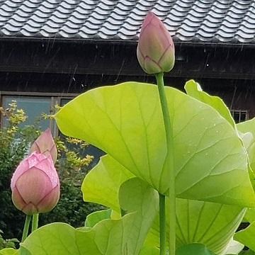 ブリ尾の花ー1