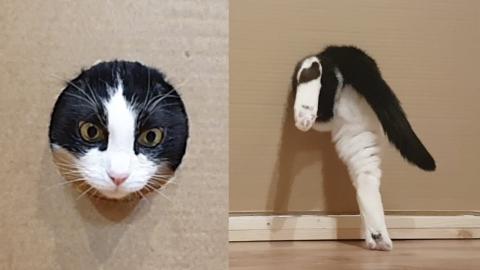 ネコちゃんの穴抜け_01
