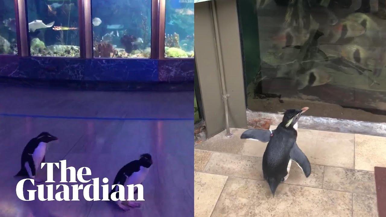 水族館の中を散歩するペンギンが癒される!!