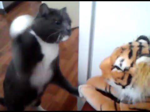 トラのぬいぐるみと戦うネコが容赦ない!!