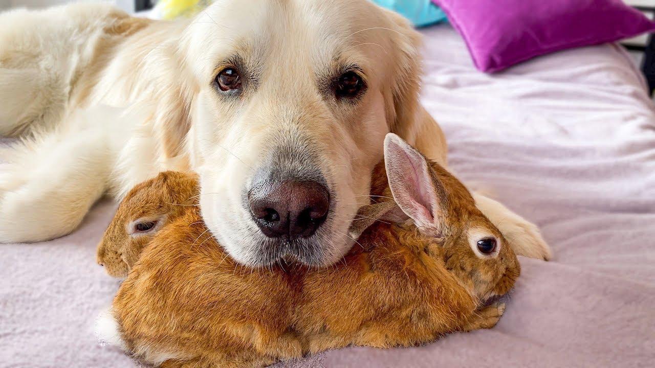 犬とウサギとインコの仲良し動画が猛烈に癒される!!
