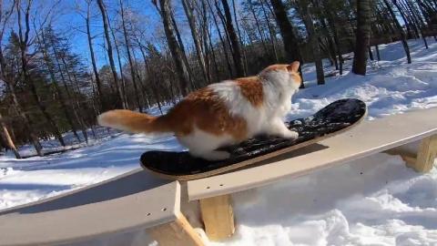 スノボーが大好きな猫_01