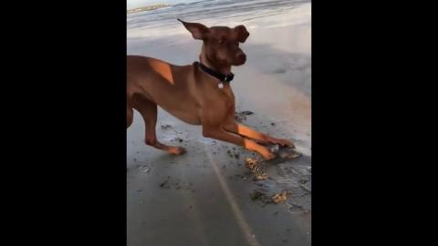 大きな貝を見つけた犬_01