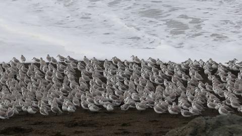 波から逃げる鳥_01