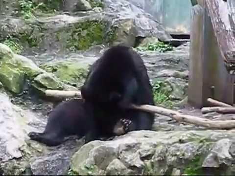 棒を器用に使うクマがかなり器用すぎる!!