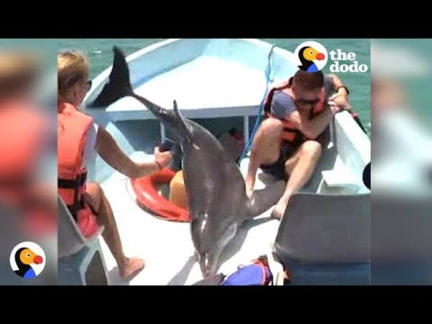 イルカがボートに飛び込む_01