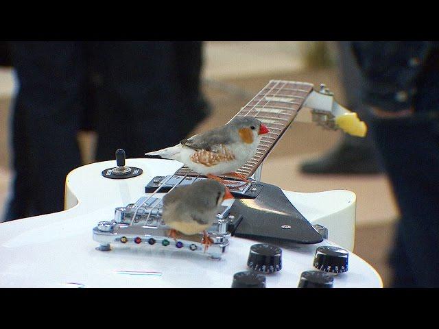 小鳥たちがギターを演奏する不思議なアートがステキ!!