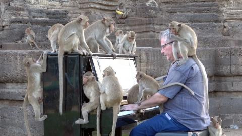 サルのたちにピアノを演奏_01