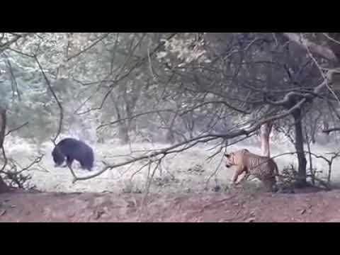 クマにイタズラ_01