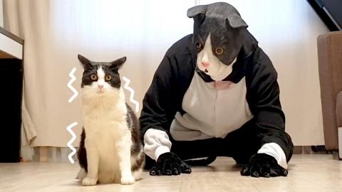 ネコのコスプレに反応_01