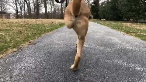2本足の犬_01