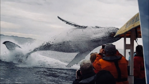 クジラがジャンプ_01