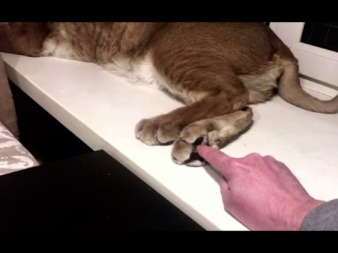 大きなネコ(クアール)_01