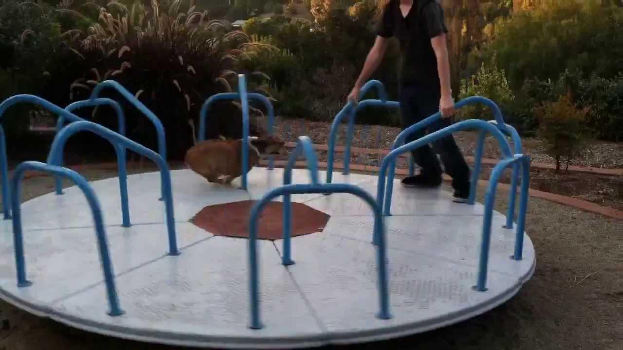 公園のくるくる回る遊具が大好きなコーギー犬がカワイイ!!