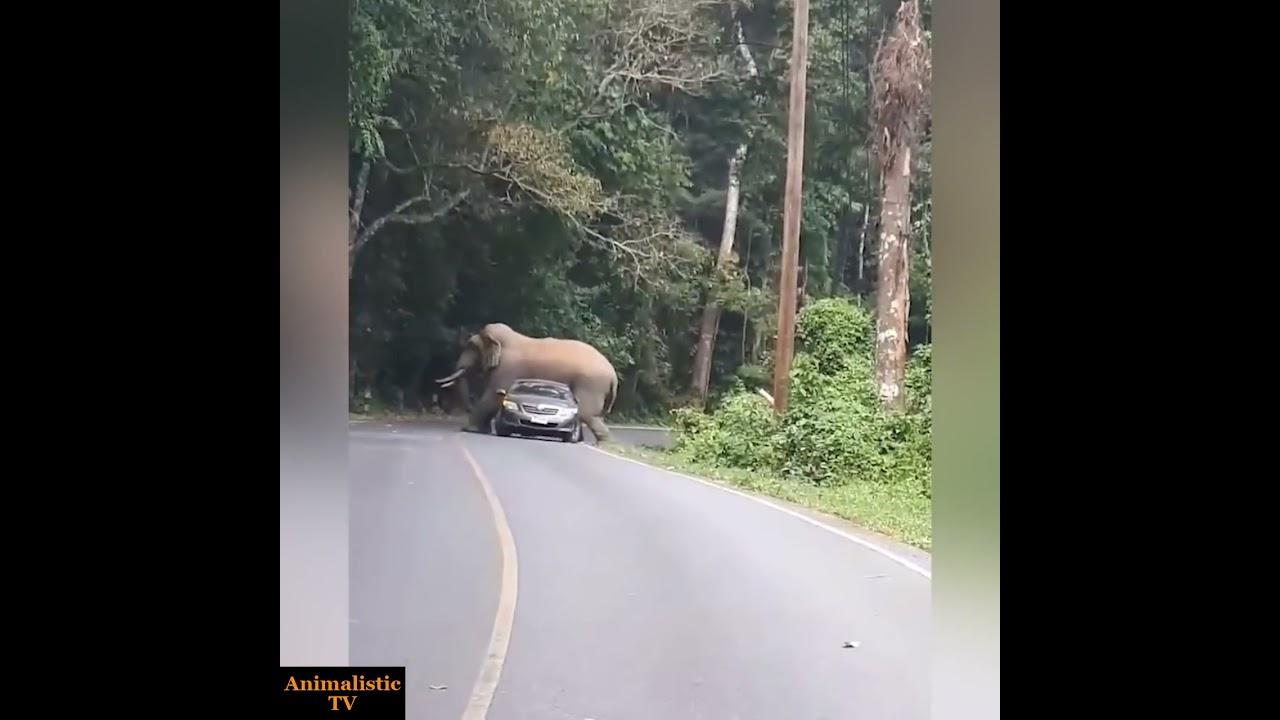 野生のゾウに絡まれた自動車の被害が辛い。。