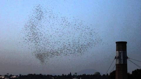 鳥の大群_01