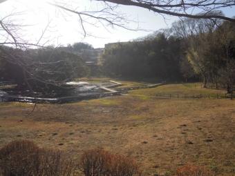 厳島湿性公園210120